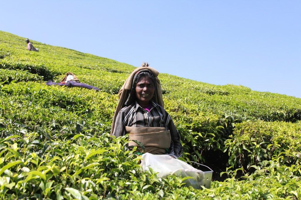 Tee Kerala
