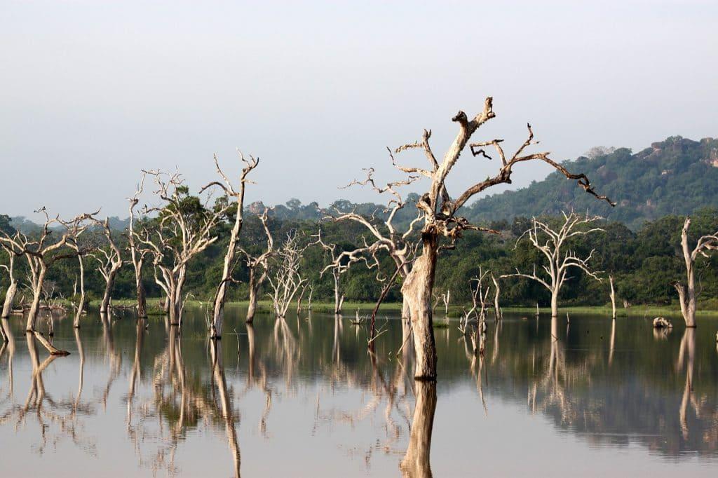 Landschaft im Yala-Nationalpark